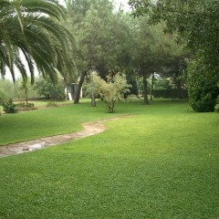Beautiful property fully fenced with all kinds of fruit trees